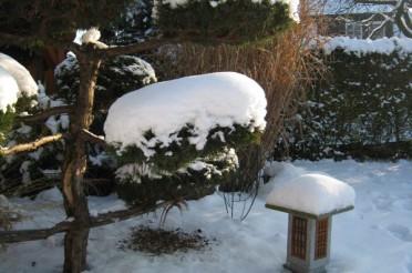 Koi im Winter – der richtige Schutz